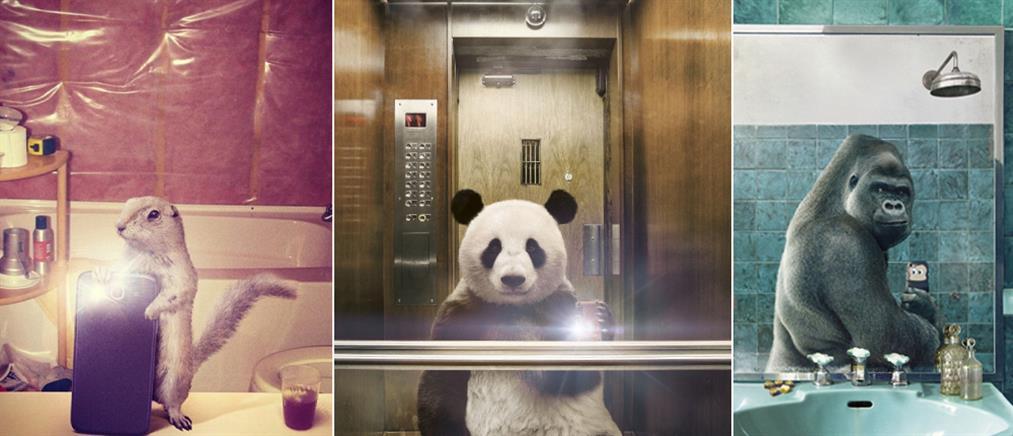 Και τα ζώα μπορούν να τραβήξουν μία selfie