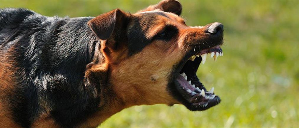 Επίθεση σκύλου σε γυναίκα