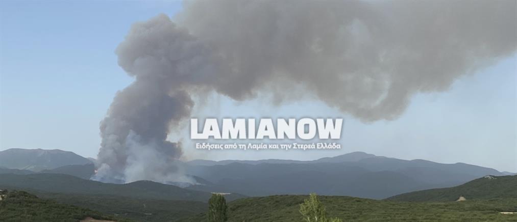 """Φωτιά στο Λογγίτσι: """"Μάχη"""" για να τεθεί υπό έλεγχο (εικόνες)"""