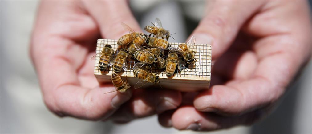 Πέθανε από τσιμπήματα μελισσών