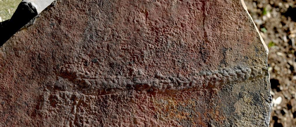 Ανακαλύφθηκε απολίθωμα ζώου ηλικίας 550 εκατομμυρίων ετών!
