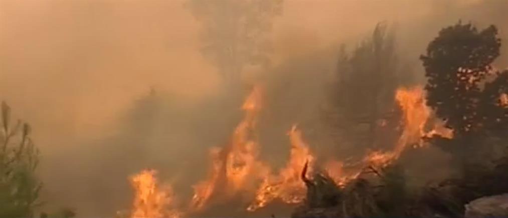 Πυρκαγιά σε δασική έκταση στο Ρέθυμνο