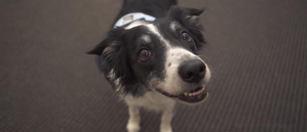 Μπορούν να… μιλήσουν τα σκυλιά; Μη βιαστείτε να απαντήσετε (Βίντεο)
