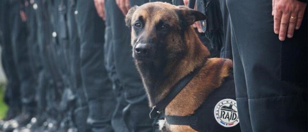 Θα παρασημοφορηθεί η σκυλίτσα Ντίζελ που σκοτώθηκε στο Παρίσι