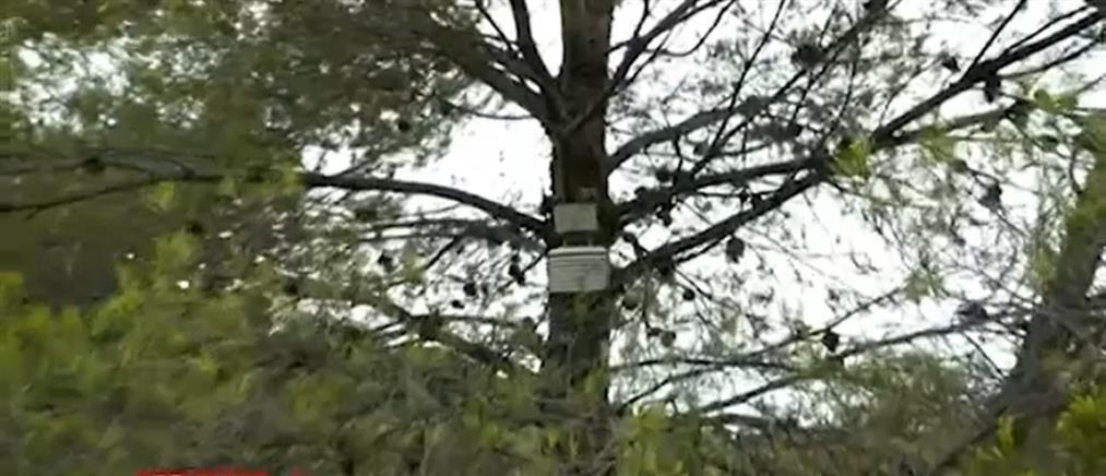 Ισπανία - Φωτιά: χωρικοί έβαλαν ανιχνευτές καπνού πάνω σε δέντρα! (βίντεο)