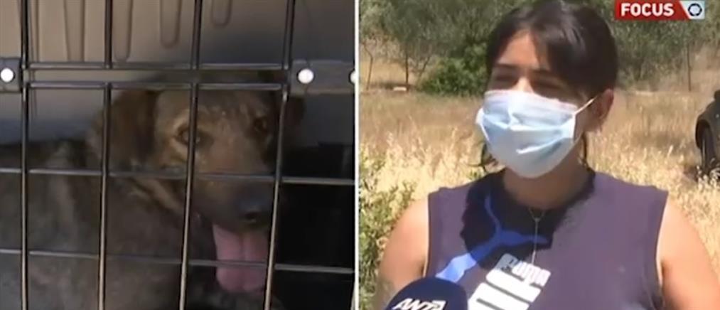 Φωτιά στα Γεράνεια Όρη: Δραματικές διασώσεις ζώων που εγκλωβίστηκαν (βίντεο)