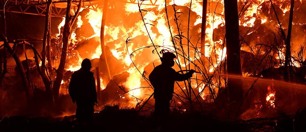 Φάρμα έγινε παρανάλωμα του πυρός (εικόνες)