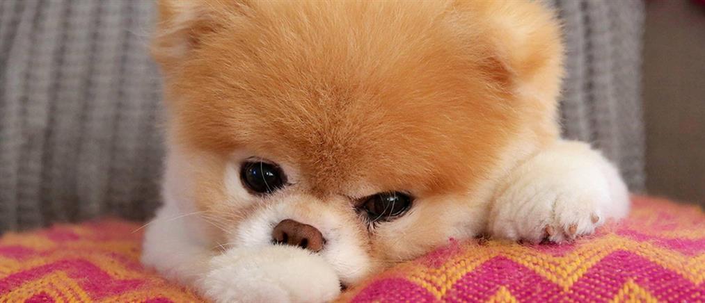 Κορονοϊός: Προβληματισμός για τον σκύλο που βρέθηκε θετικός στον ιό
