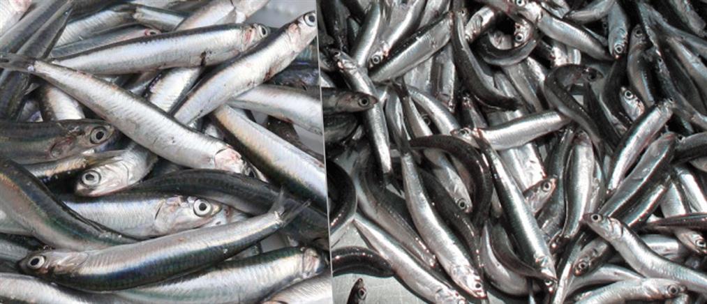 Επιλεκτική όσφρηση: ποιοι έχουν...ανοσία στην μυρωδιά του ψαριού