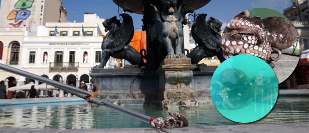 «Ψάρεψαν» χταπόδι στο σιντριβάνι της Πάτρας!