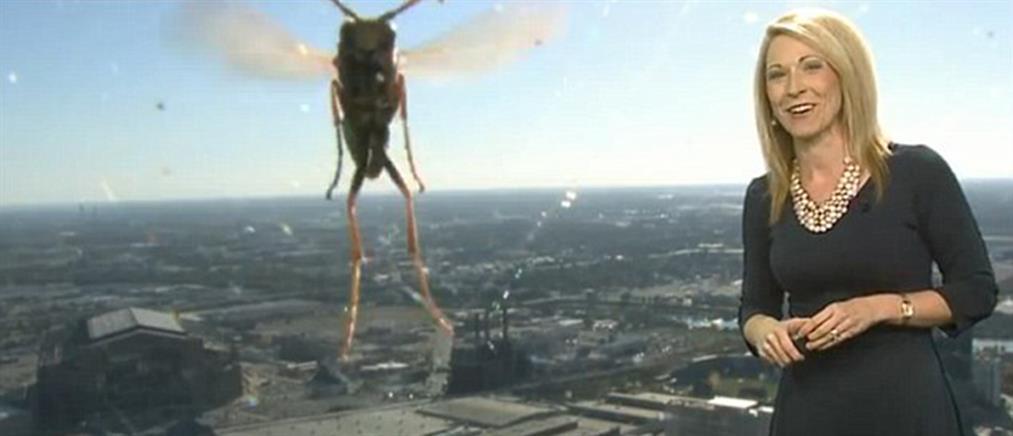 Μετεωρολόγος φρίκαρε αντικρίζοντας μία «τεράστια» μέλισσα