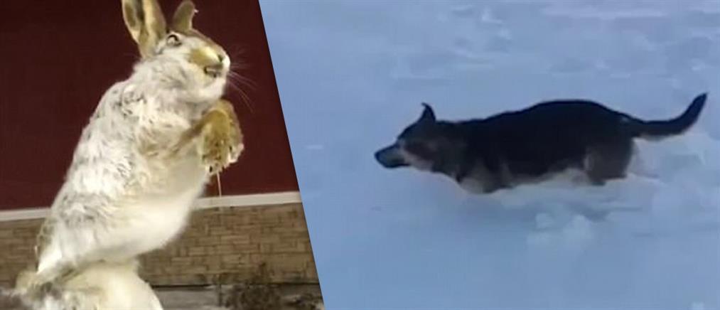 Ζώα πάγωσαν από το ψύχος (βίντεο)