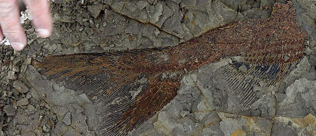 """Στο φως συλλογή απολιθωμάτων από την ημέρα της """"Αποκάλυψης"""" (εικόνα)"""