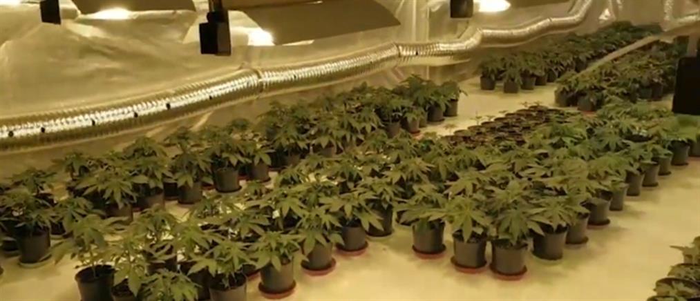 Λειτουργούσαν πλήρως οργανωμένο φυτώριο κάνναβης στη Λυκόβρυση (βίντεο)