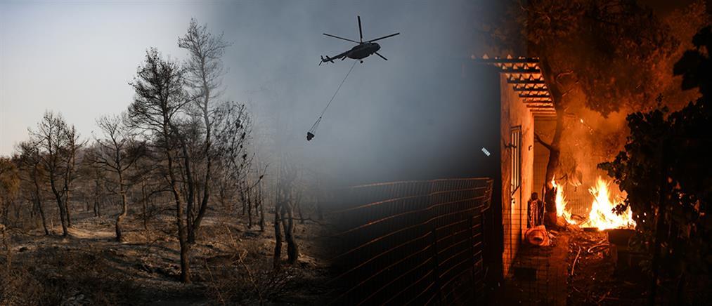 Τεράστιο το οικολογικό και οικονομικό πλήγμα από την φωτιά στην Εύβοια (βίντεο)
