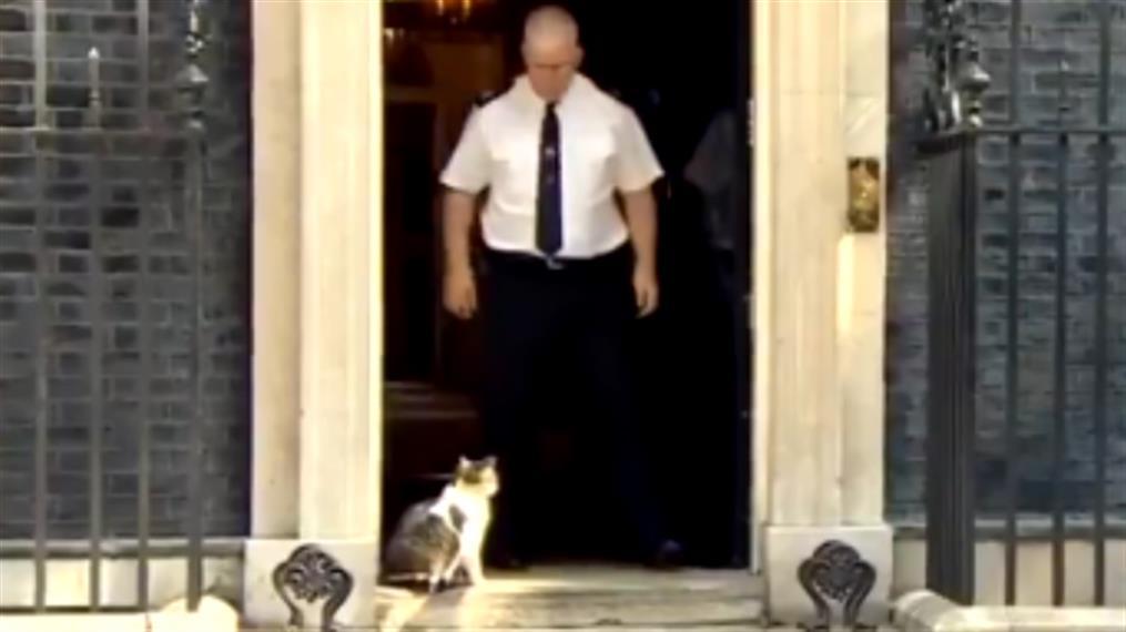 Λάρι: Ο διάσημος γάτος της Ντάουνινγκ Στριτ