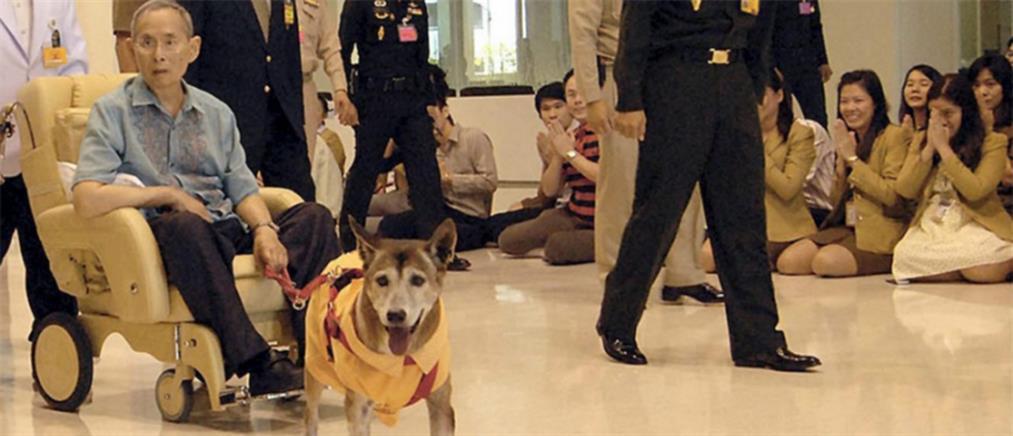 Η Ταϊλάνδη πενθεί για τη σκυλίτσα του βασιλιά-Πρωτοσέλιδη είδηση στη χώρα