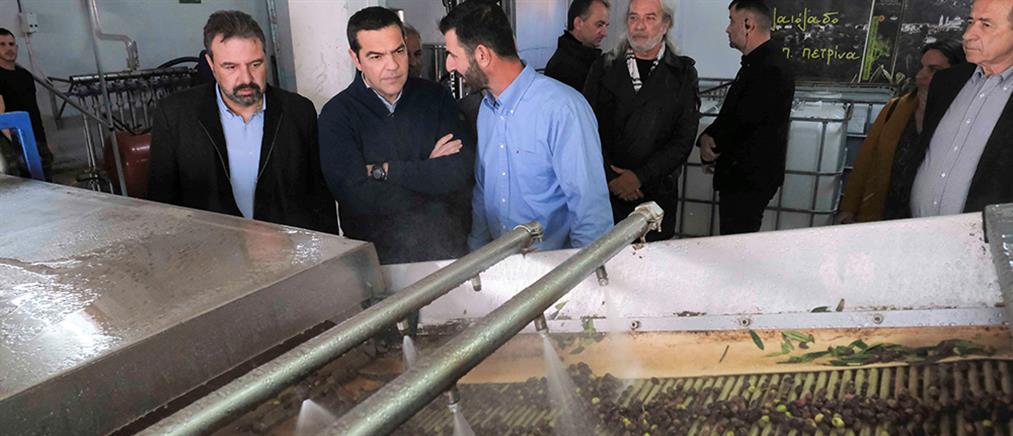 Τσίπρας: Να δοθεί άμεσα λύση στο πρόβλημα της χαμηλής τιμής του ελαιόλαδου