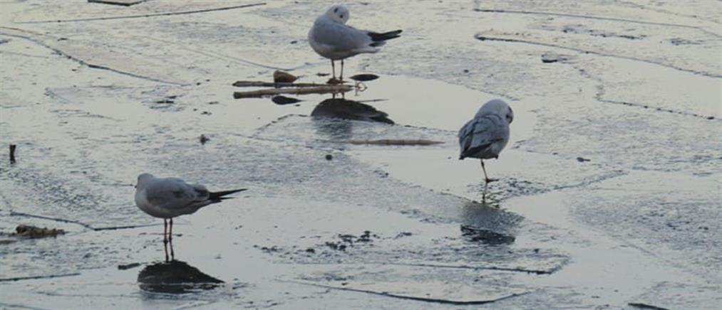 Πάγωσε η λίμνη Ιωαννίνων! (εικόνες)