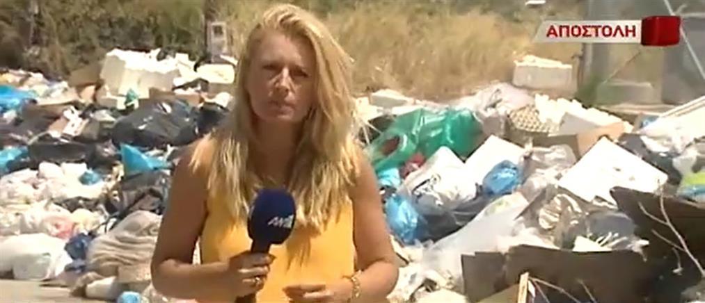 Αποστολή στο Αίγιο: Εφιάλτης τα σκουπίδια για τους κατοίκους (βίντεο)
