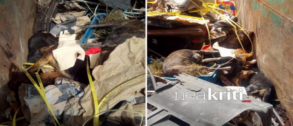 Δηλητηρίασαν δεκάδες αδέσποτα ζώα στην Κρήτη
