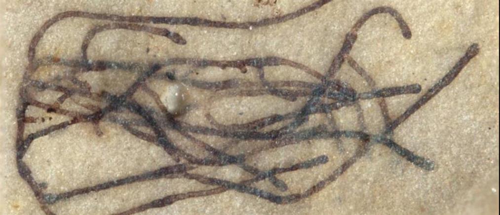 Ένα μικροσκοπικό φύκι είναι το αρχαιότερο απολίθωμα πράσινου φυτού στην Γη (εικόνες)