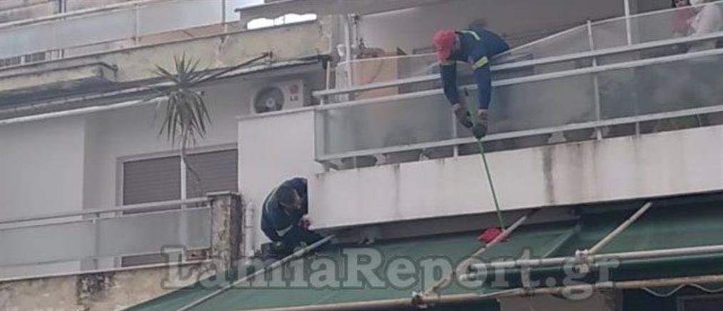 """Λαμία: """"Επιχείρηση κουνέλι"""" για την Πυροσβεστική (εικόνες)"""