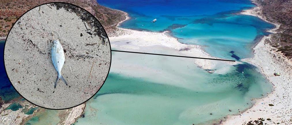 Προβληματισμός από τις εικόνες φημισμένης παραλίας της Κρήτης (εικόνες)