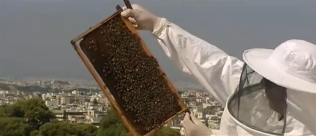 Μελίσσια σε ταράτσα κτηρίου στο κέντρο της Αθήνας (βίντεο)