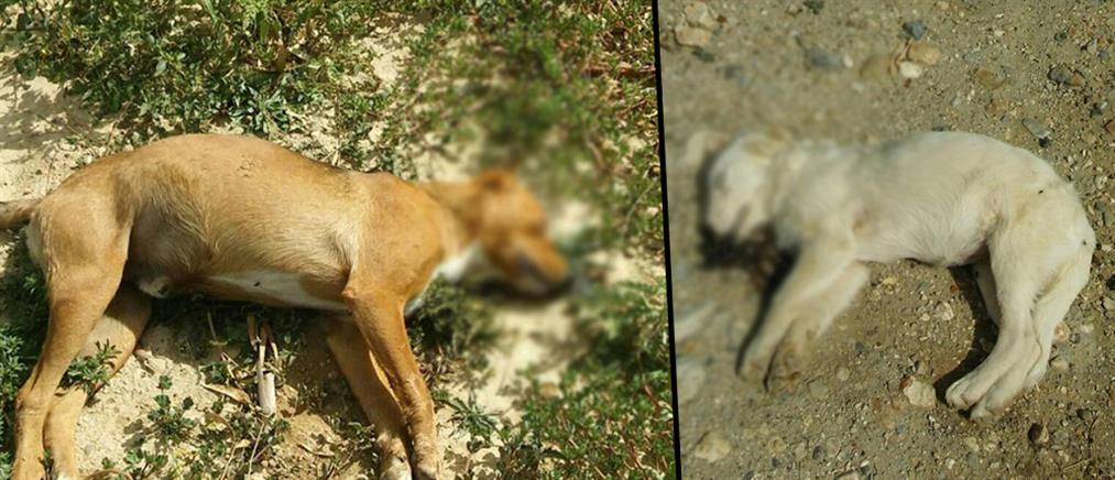 Ναύπλιο: μαζική εξόντωση αδέσποτων ζώων (Σκληρές εικόνες)