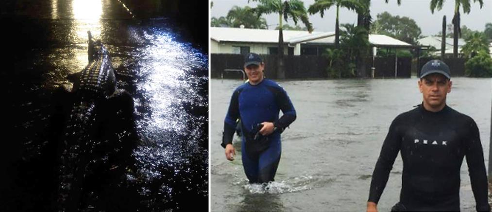 Αυστραλία: κροκόδειλοι βγήκαν στους πλημμυρισμένους δρόμους (εικόνες)