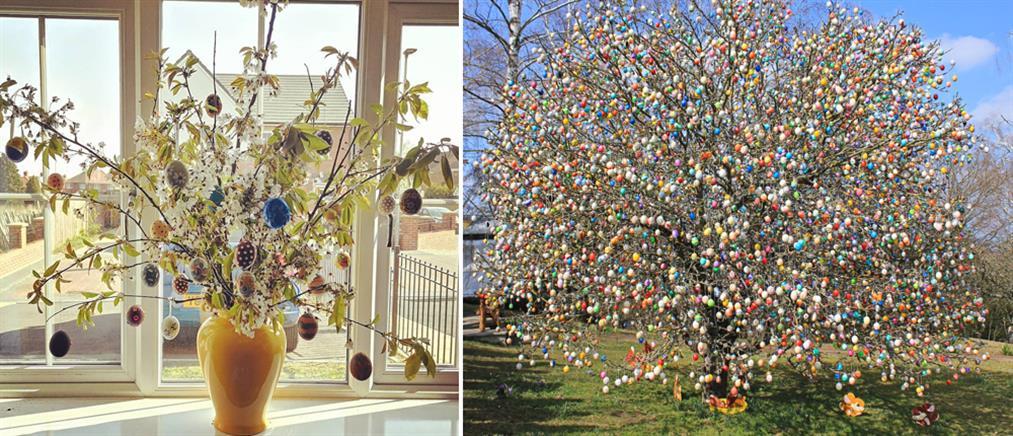 Το δέντρο του Πάσχα… μία παράδοση 124 ετών (εικόνες)