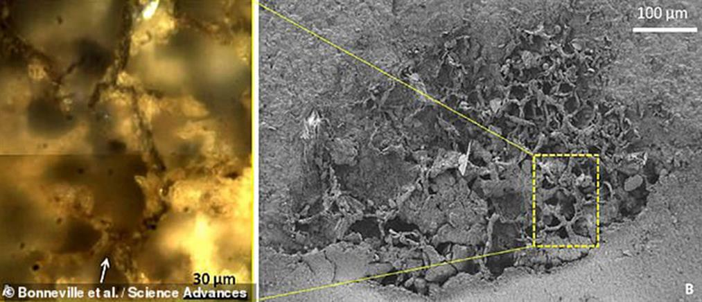 Βρέθηκαν τα αρχαιότερα μανιτάρια στην Ιστορία (εικόνες)