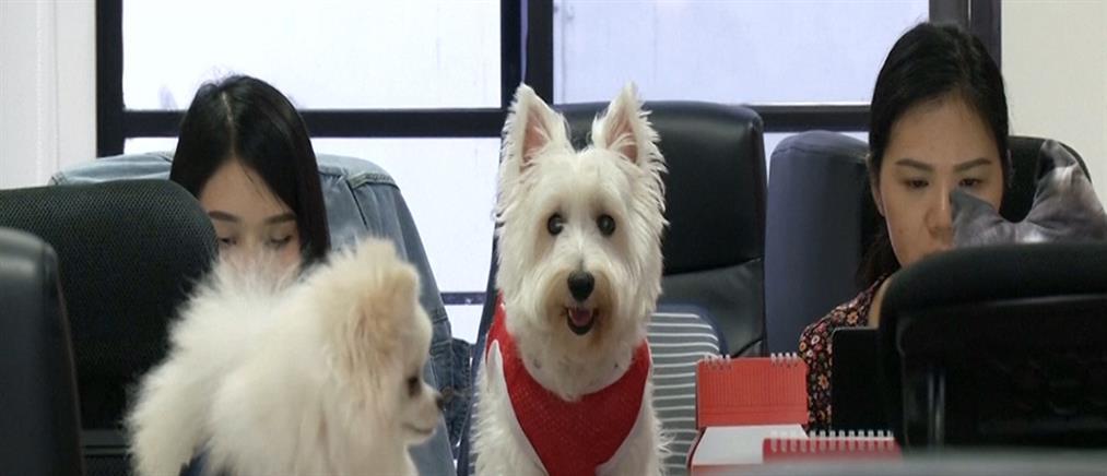 Νέα μόδα: Φέρε τον σκύλο σου στη δουλειά (βίντεο)