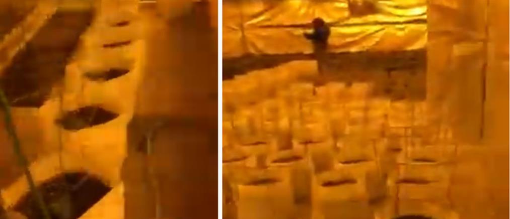 Βίντεο από την τεράστια χασισοφυτεία στην Αττική