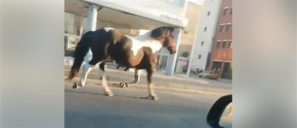 Βίντεο: Άλογο.. κόβει βόλτες στο κέντρο της Θεσσαλονίκης!