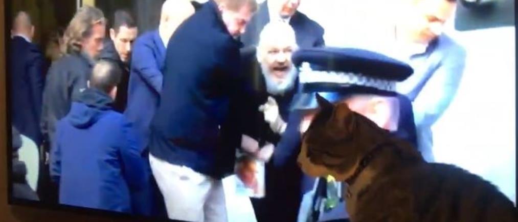 Ο… γάτος του Ασάνζ είναι ασφαλής διαβεβαιώνει το Wikileaks (βίντεο)