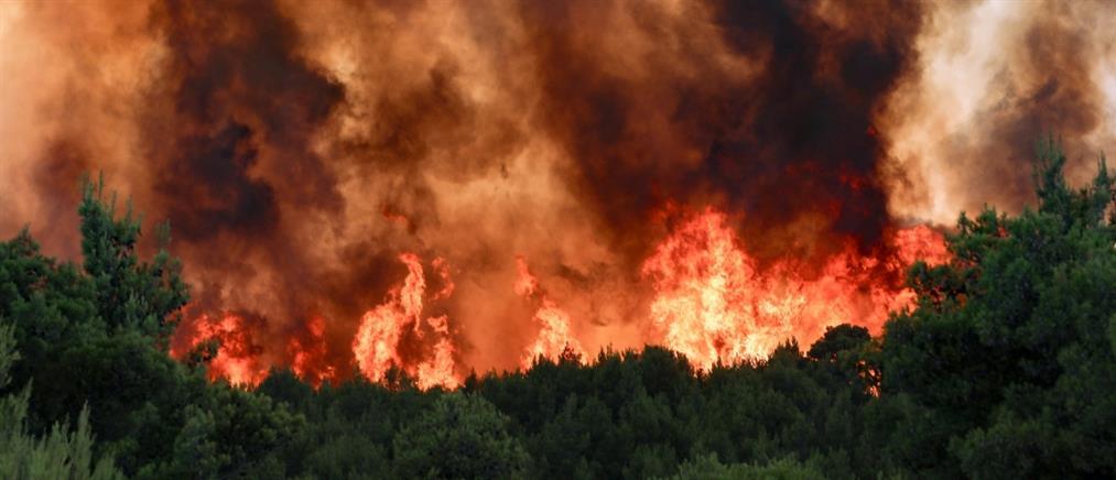 Φωτιές: Ο Νίκος Χαρδαλιάς για τα πύρινα μέτωπα
