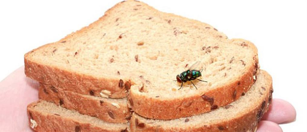 """Μην αφήνετε τις μύγες να """"κάθονται"""" στο φαγητό σας - Είναι φορείς ασθενειών"""