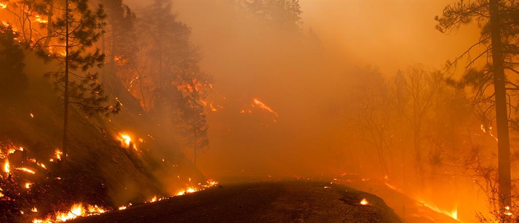 Οι δασικές πυρκαγιές απειλή για την εξάπλωση του κορονοϊού