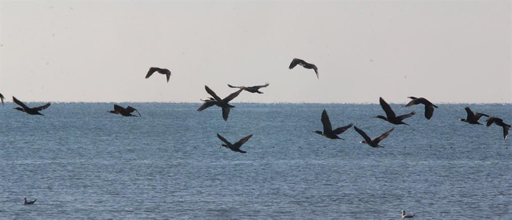 """Κακοκαιρία: Θύματα της """"Θάλειας"""" εκατοντάδες πουλιά"""