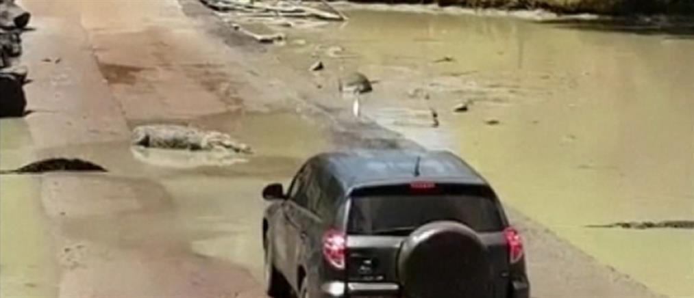 """Κροκόδειλοι έκαναν """"μπλόκο"""" σε αυτοκίνητο (βίντεο)"""