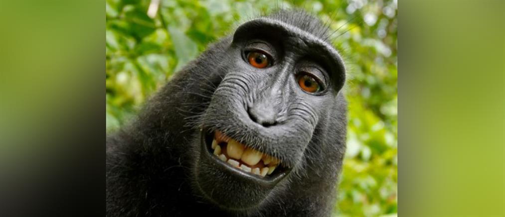 """Έληξε η δικαστική διαμάχη για τη διάσημη """"selfie της μαϊμούς"""""""