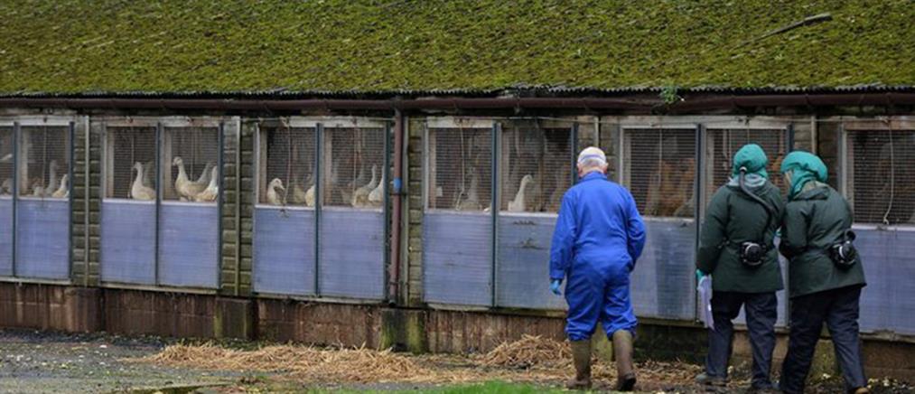 """""""Συναγερμός"""" στη Βουλγαρία για κρούσματα γρίπης των πτηνών"""