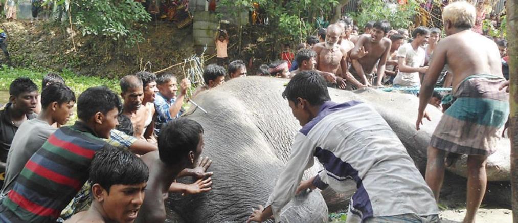 Χωρικοί βούτηξαν σε βάλτο για να σώσουν ελέφαντα που πνιγόταν (Βίντεο)
