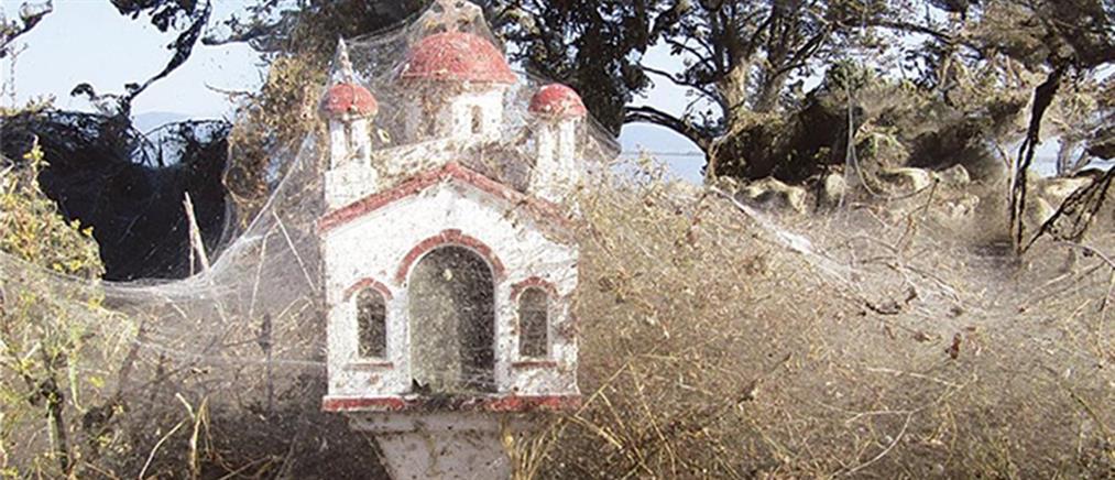 """Ιστοί αράχνης """"κατάπιαν"""" 1000 μέτρα βλάστησης στην Βιστωνίδα (εικόνες)"""