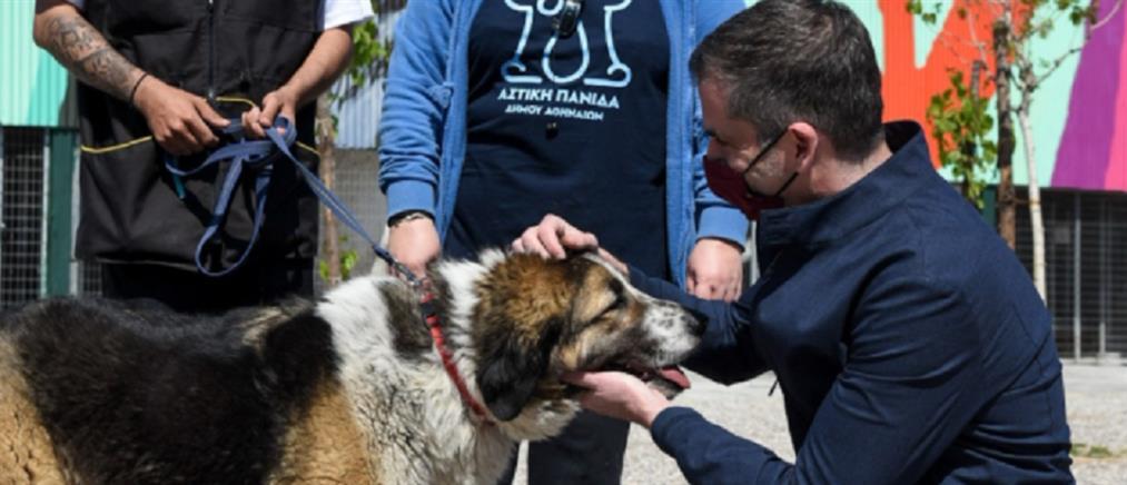 Δήμος Αθηναίων: Έτοιμο το πρώτο σύγχρονο καταφύγιο για αδέσποτα ζώα