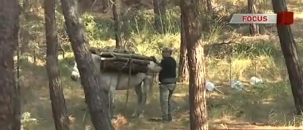 Έκλεψαν τους υλοτόμους που σώζουν το δάσος του Σέιχ Σου! (βίντεο)
