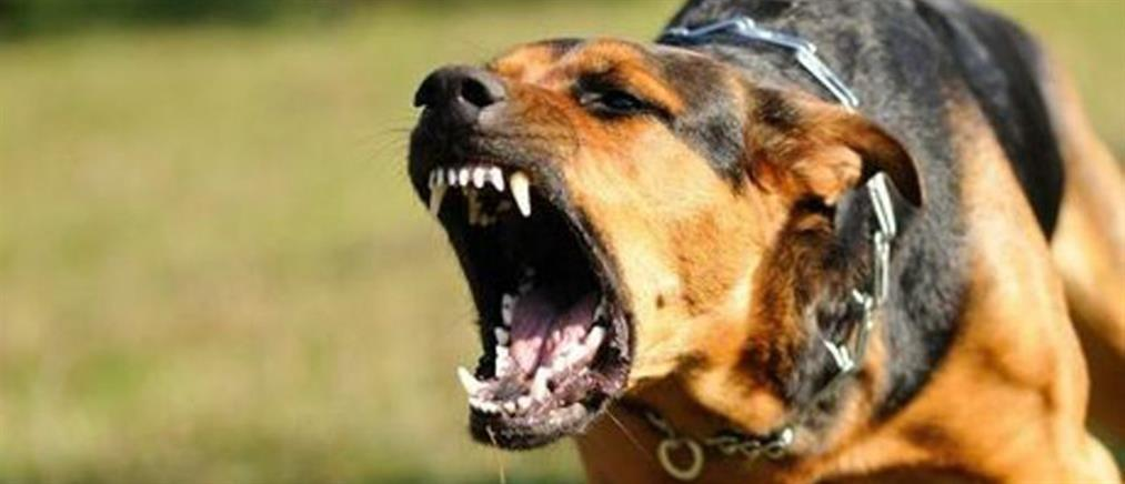 Σκύλος δάγκωσε στο πρόσωπο κοριτσάκι