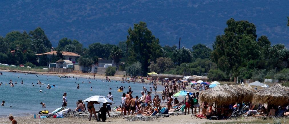 Μεγάλος πληθυσμός από τσούχτρες εντοπίστηκε σε παραλίες της Ανατολικής Αττικής (βίντεο)